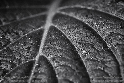 Edmund a black and white macro photo of a leaf belonging to